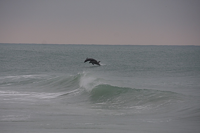 West Central Florida Gulf Surf Report Photography. Featuring photographs from standout surfing spots along the Gulf Coast. Photo taken and posted on January 30 2020, 17:51